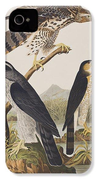 Goshawk And Stanley Hawk IPhone 4 / 4s Case by John James Audubon
