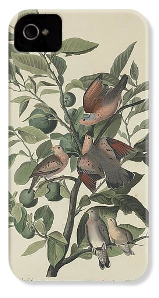 Ground Dove IPhone 4 / 4s Case by John James Audubon