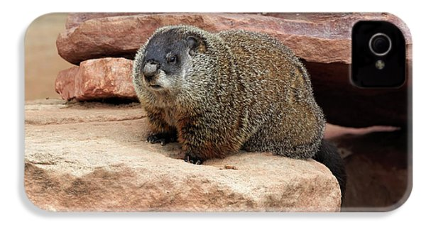 Groundhog IPhone 4 / 4s Case by Louise Heusinkveld