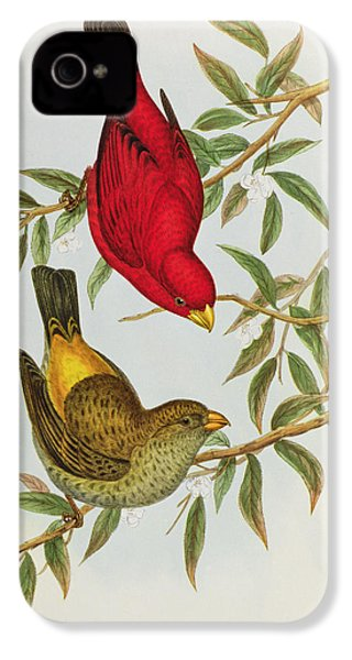 Haematospiza Sipahi IPhone 4 / 4s Case by John Gould