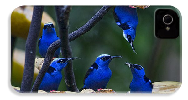 Honeycreeper IPhone 4 / 4s Case by Betsy Knapp