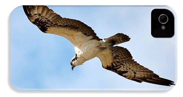 Hunter Osprey IPhone 4 / 4s Case by Carol Groenen