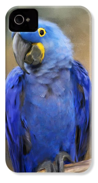 Hyacinth Macaw  IPhone 4 / 4s Case by Jai Johnson