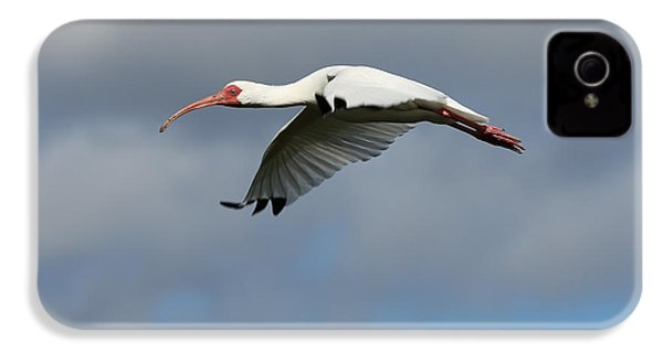 Ibis In Flight IPhone 4 / 4s Case by Carol Groenen