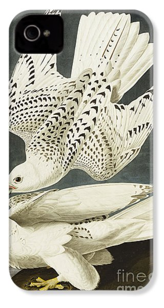 Iceland Or Jer Falcon IPhone 4 / 4s Case by John James Audubon