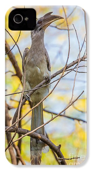 Indian Grey Hornbill IPhone 4 / 4s Case by B. G. Thomson