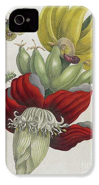 Inflorescence Of Banana, 1705 IPhone 4 / 4s Case by Maria Sibylla Graff Merian