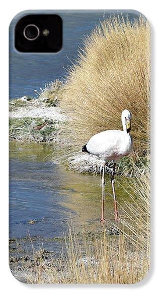 Juvenile Flamingo No. 64 IPhone 4 / 4s Case by Sandy Taylor