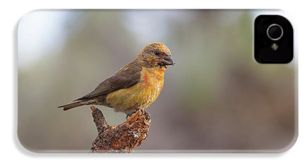 Juvenile Male Red Crossbill IPhone 4 / 4s Case by Doug Lloyd
