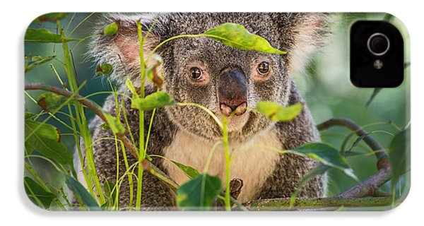 Koala Leaves IPhone 4 / 4s Case by Jamie Pham