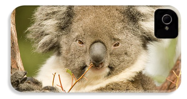 Koala Snack IPhone 4 / 4s Case by Mike  Dawson