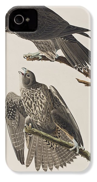 Labrador Falcon IPhone 4 / 4s Case by John James Audubon