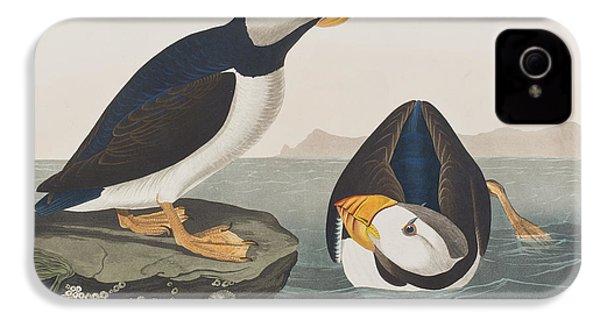 Large Billed Puffin IPhone 4 / 4s Case by John James Audubon