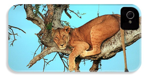 Lioness In Africa IPhone 4 / 4s Case by Sebastian Musial