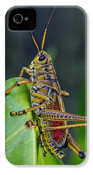 Lubber Grasshopper IPhone 4 / 4s Case by Richard Rizzo