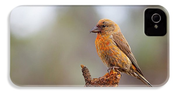 Male Red Crossbill IPhone 4 / 4s Case by Doug Lloyd