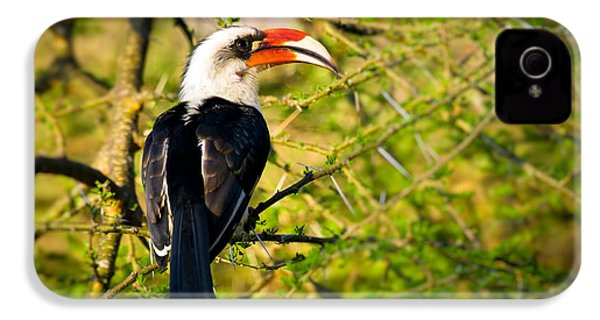 Male Von Der Decken's Hornbill IPhone 4 / 4s Case by Adam Romanowicz