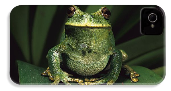 Marsupial Frog Gastrotheca Orophylax IPhone 4 / 4s Case by Pete Oxford