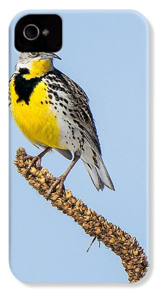 Meadowlark On Mullein Stalk IPhone 4 / 4s Case by Stephen Johnson