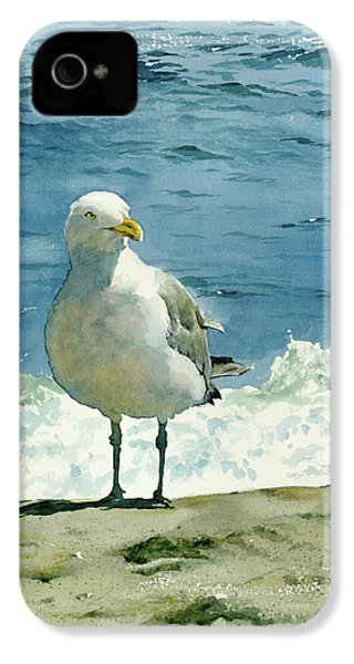 Montauk Gull IPhone 4 / 4s Case by Tom Hedderich