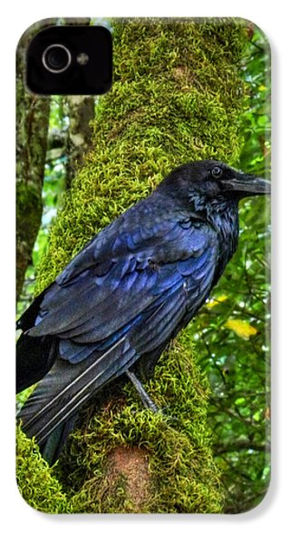 Muir Woods Raven 001 IPhone 4 / 4s Case by Lance Vaughn