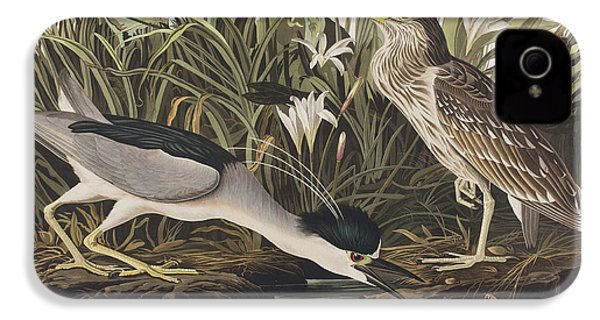 Night Heron Or Qua Bird IPhone 4 / 4s Case by John James Audubon