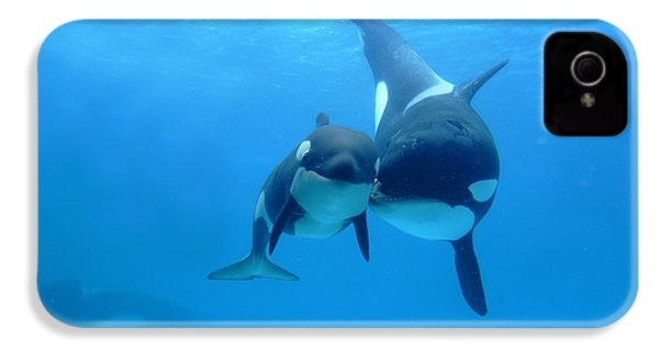Orca Orcinus Orca Mother And Newborn IPhone 4 / 4s Case by Hiroya Minakuchi