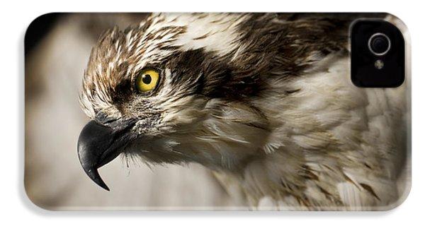 Osprey IPhone 4 / 4s Case by Adam Romanowicz