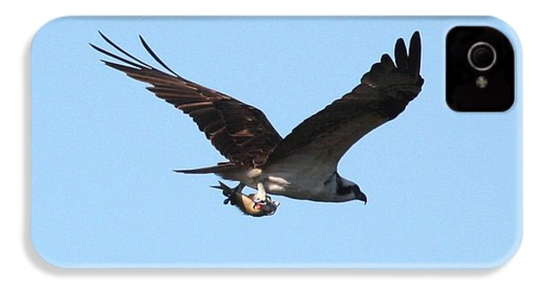 Osprey With Fish IPhone 4 / 4s Case by Carol Groenen