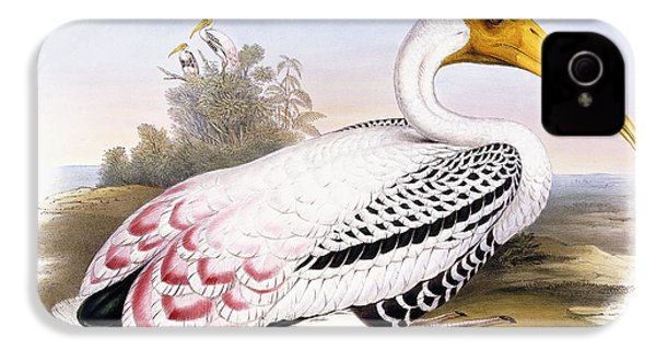 Painted Stork IPhone 4 / 4s Case by John Gould