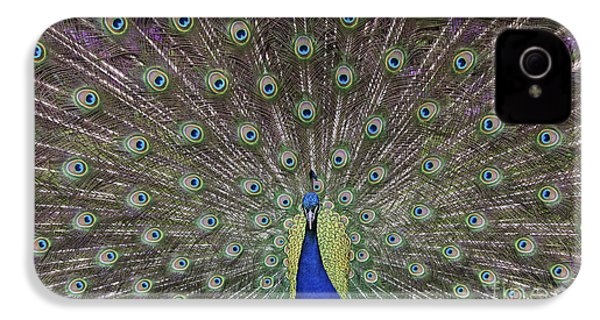 Peacock Display IPhone 4 / 4s Case by Tim Gainey