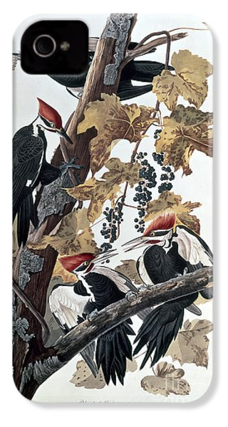 Pileated Woodpeckers IPhone 4 / 4s Case by John James Audubon