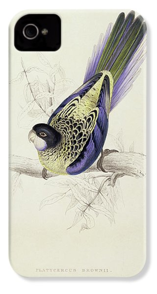 Platycercus Brownii, Or Browns Parakeet IPhone 4 / 4s Case by Edward Lear