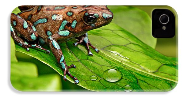 poison art frog Panama IPhone 4 / 4s Case by Dirk Ercken