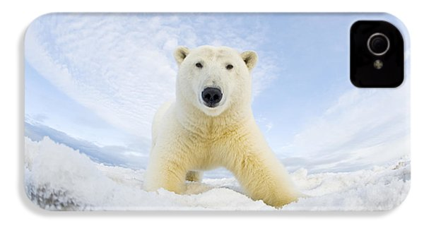 Polar Bear  Ursus Maritimus , Curious IPhone 4 / 4s Case by Steven Kazlowski