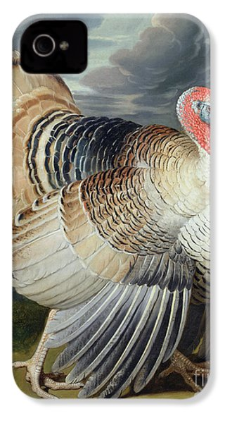 Portrait Of A Turkey  IPhone 4 / 4s Case by Johann Wenceslaus Peter Wenzal