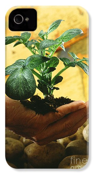 Potato Plant IPhone 4 / 4s Case by Science Source