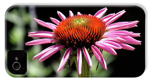 Pretty Pink Coneflower IPhone 4 / 4s Case by Rona Black