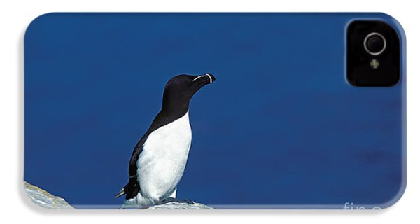 Razor-billed Auk Alca Torda IPhone 4 / 4s Case by Gerard Lacz