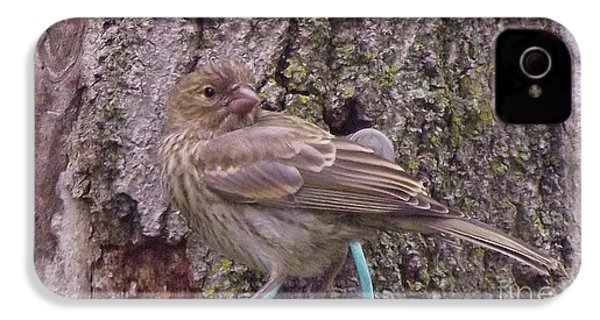 Red Crossbill Female  Indiana  Summer IPhone 4 / 4s Case by Rory Cubel