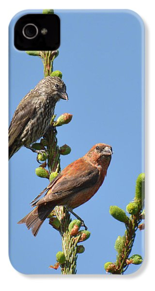 Red Crossbill Pair IPhone 4 / 4s Case by Alan Lenk