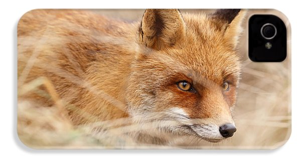 Red Fox On The Hunt IPhone 4 / 4s Case by Roeselien Raimond