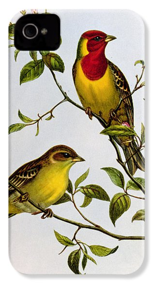Red Headed Bunting IPhone 4 / 4s Case by John Gould