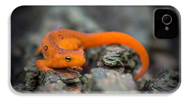 Red Spotted Newt IPhone 4 / 4s Case by Chris Bordeleau