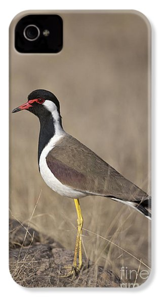 Red-wattled Lapwing IPhone 4 / 4s Case by Bernd Rohrschneider/FLPA
