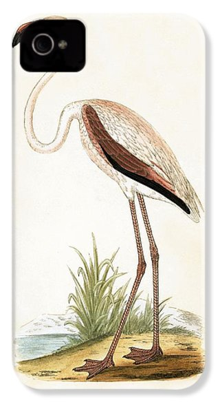 Rosy Flamingo IPhone 4 / 4s Case by English School