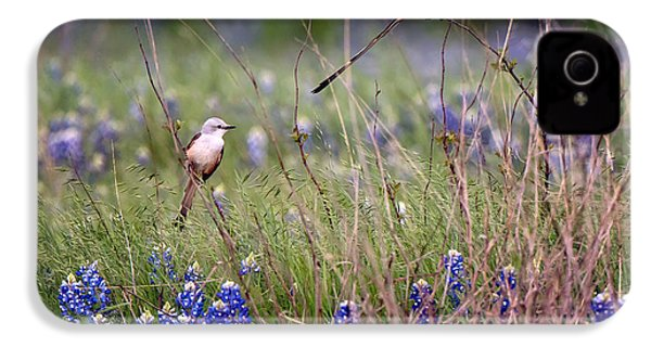 Scissor-tailed Flycatchers IPhone 4 / 4s Case by Cathy Alba