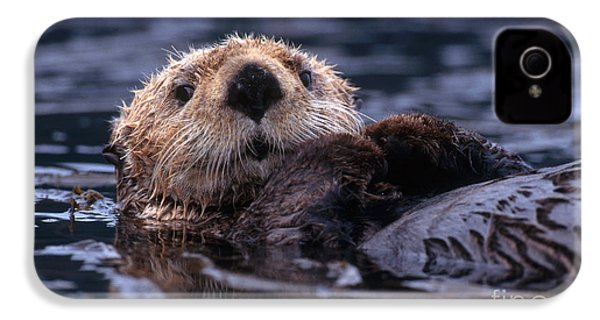 Sea Otter IPhone 4 / 4s Case by Yva Momatiuk and John Eastcott and Photo Researchers