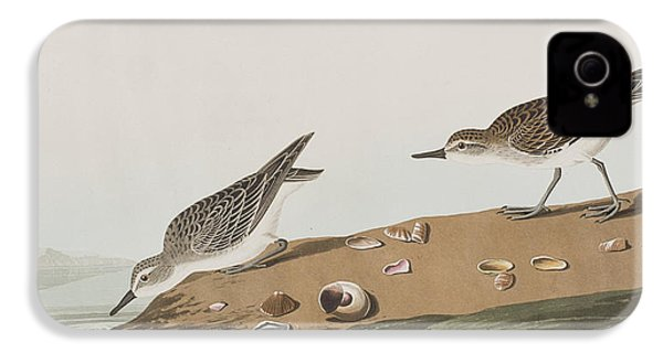 Semipalmated Sandpiper IPhone 4 / 4s Case by John James Audubon