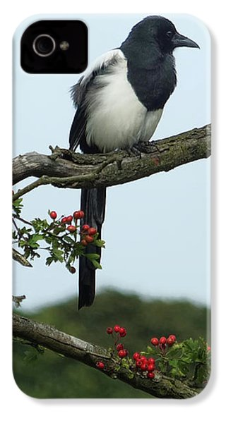 September Magpie IPhone 4 / 4s Case by Philip Openshaw